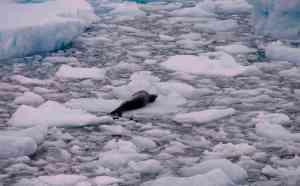 Antarctica Extreme Life
