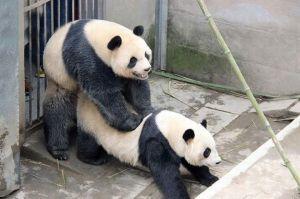 PAY-Lu-Lu-and-Zhen-Zhen
