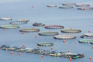 fish_farming_390_0504