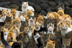 trtworld-4852-australia-plans-kill-two-million-feral-cats-reuters