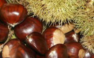 chestnuts2jpg-thumb-large